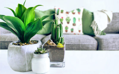 Ahad Cares – Bend Your Green Thumb – Amazing Ind...